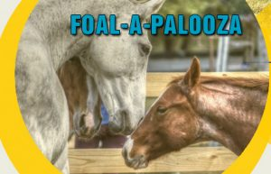 Foalapalooza 2017 (final 3.13v.2)