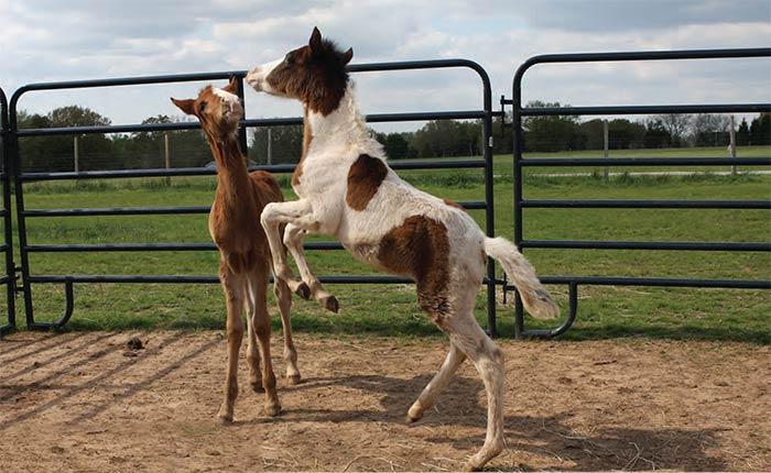 holding-horses